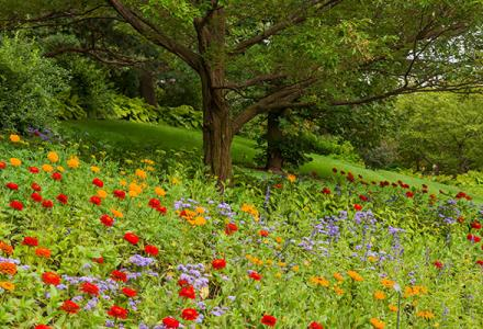 English Oak Meadow Summer