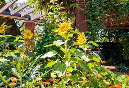 Fruit and Vegetable Garden Summer