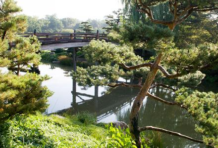 Japanese Garden in summer