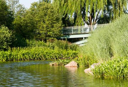 Lakeside Garden in summer