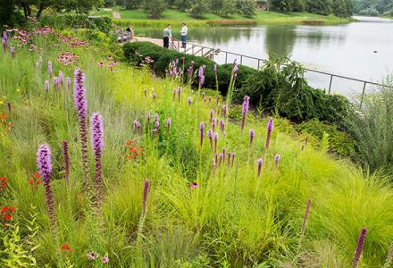 Native Plant Garden in summer