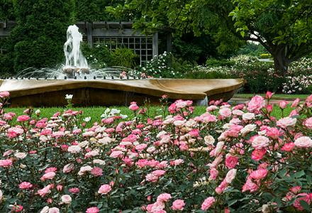 Rose Garden in summer