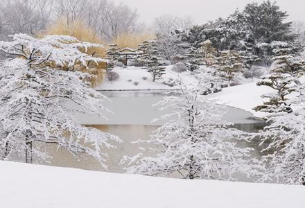 Japanese Garden in snow