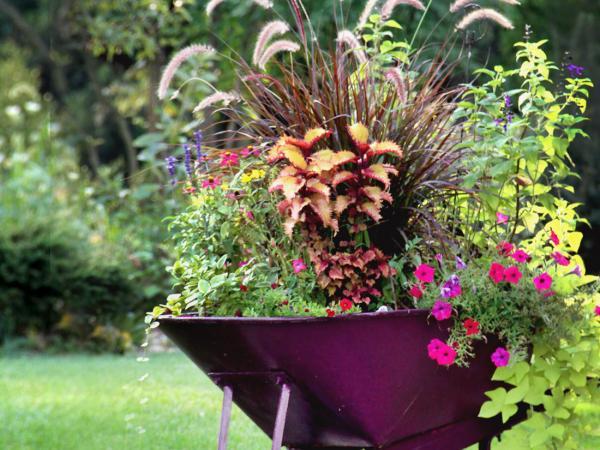 Design Tips to Make Your Garden Pop