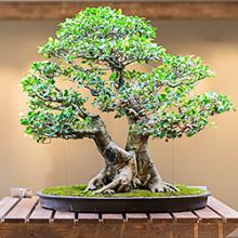 Bonsai Collection at the North Carolina Arboretum