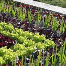 Edible Landscape Design And Gardening Chicago Botanic Garden