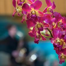 Morning Music with Orchids