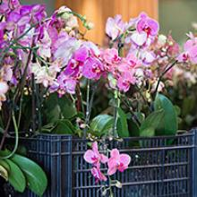 Post-Orchid Show Plant Sale