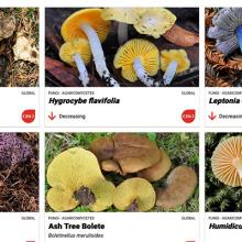 Building Capacity, Awareness, and Partnerships for Fungal Conservation
