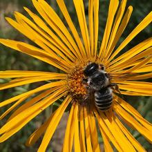 Population and Community Ecology of Wild Bees