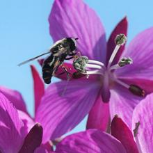 fly on artic plant