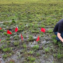 Collaborative project supports a rare plant's rocky road to recovery
