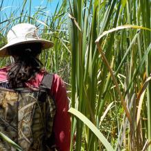 Factors Impacting Restoration Success in Wetlands