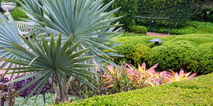 Brazil in the Garden