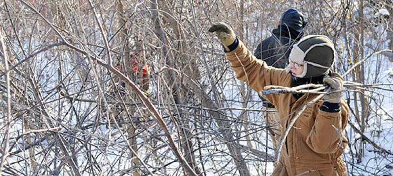 Removing buckthorn