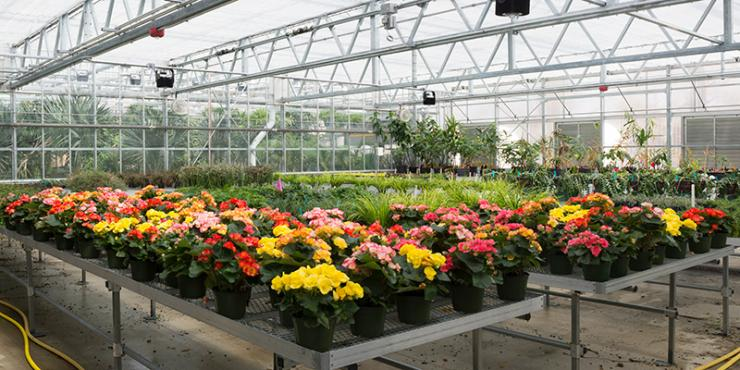 Production Greenhouse