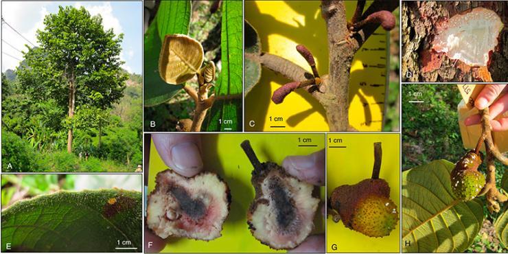 Scientists Describe Two New Tree Species