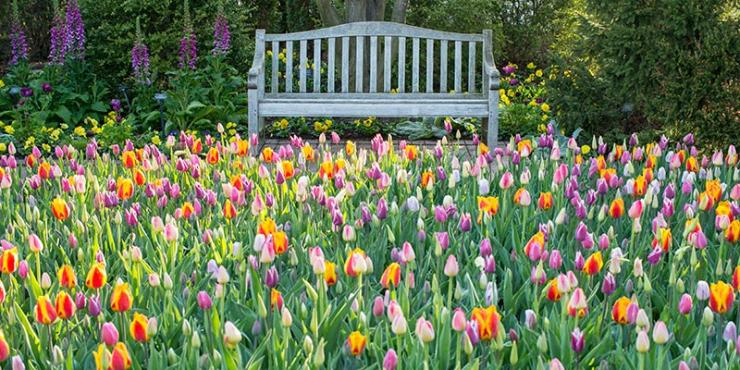 Tulips in the Circle Garden