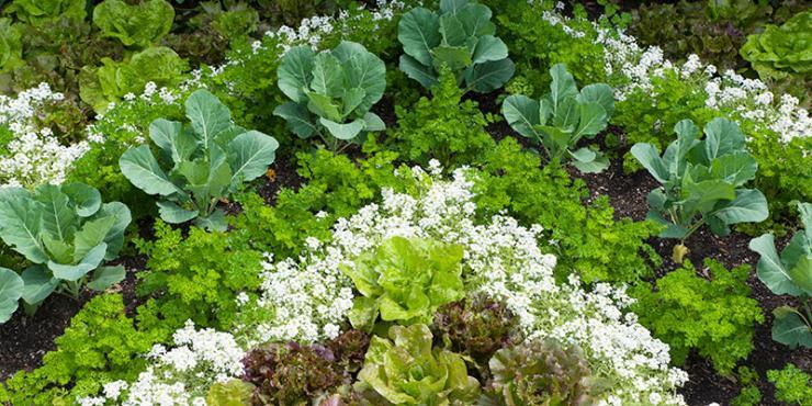 Fruit and Vegetable Garden bed