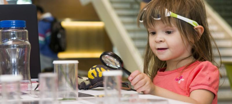 A young girl learns about bees in the Plant Science Center.