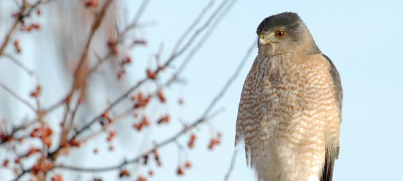 Winter Birding at the Garden