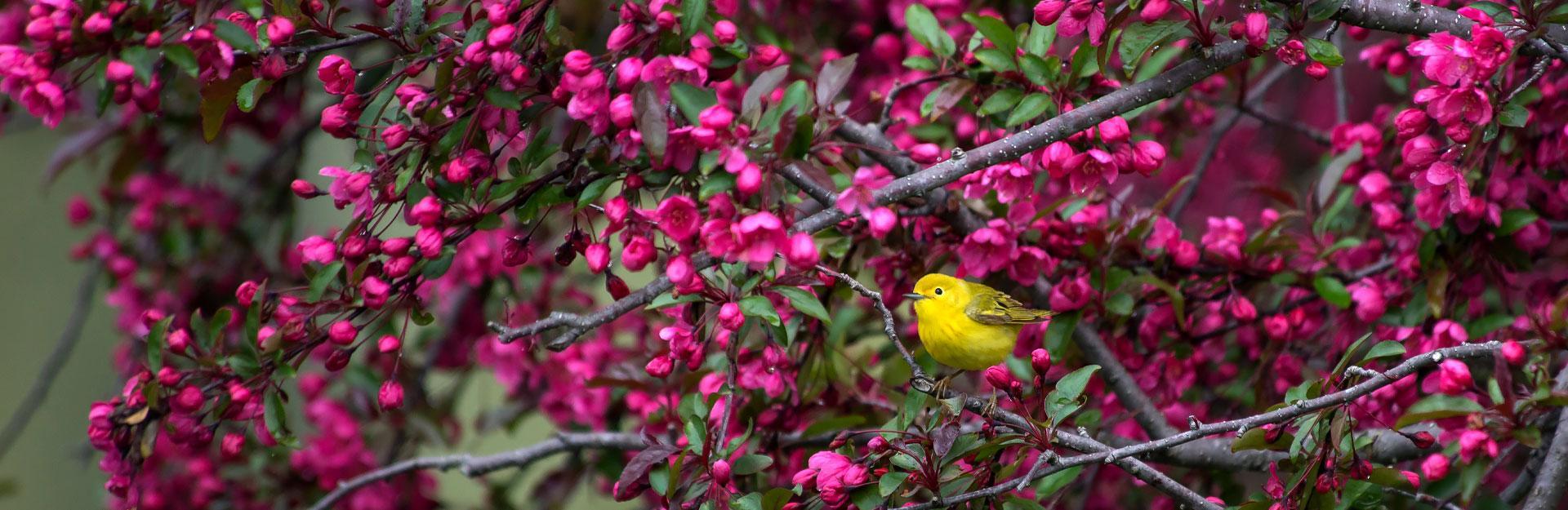 Birding at the Garden