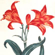 Free Library Talk: Chelsea Physic Garden: Botanical Stories
