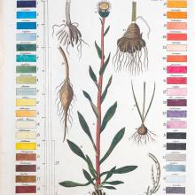 Color chart and illustration