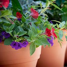 Get Growing Plant Sale