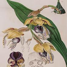Free Library Talk: Picturing Tropical Orchids