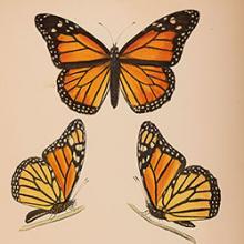 Pollinator Paradise in Print
