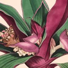 Free Library Talk: Smith & Sowerby's Botanical Collaboration