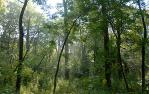 midwestern forest