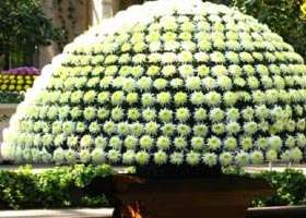 """Future Horticultural """"Wows"""""""
