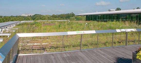 Ellis Goodman Family Foundation Green Roof Garden South in July 2015.