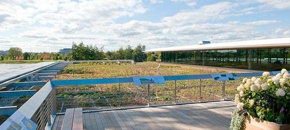 Ellis Goodman Family Foundation Green Roof Garden South in October 2009.