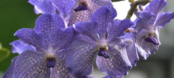 PHOTO: Orchid