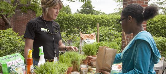 Learning about herbs at the Fruit & Vegetable Garden.