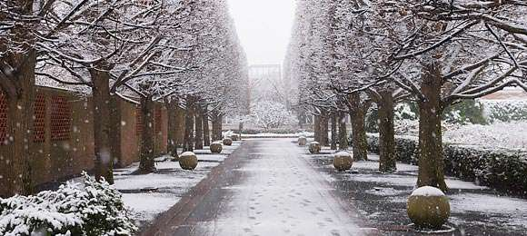 Winter at the Garden